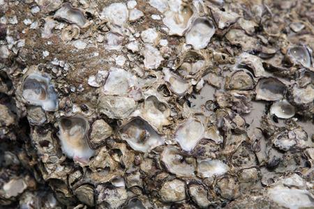karkas: Shell carcass stuck on rocks.