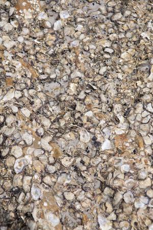 carcass: Shell karkas vast te zitten op de rotsen.