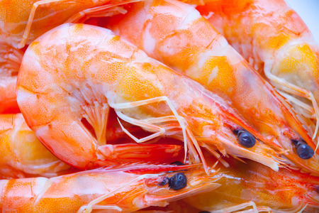 Cooked shrimps on white background.