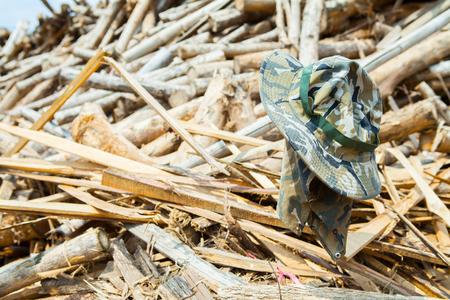 hat in Stack of teak wood log