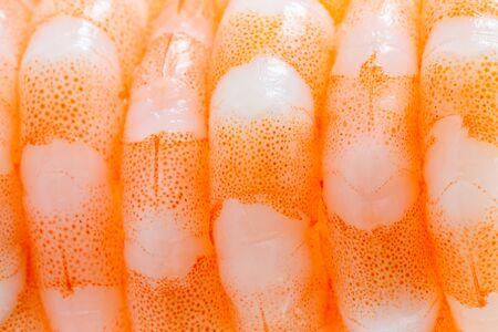 row of shrimps close up macro