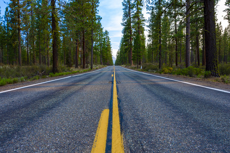 Shot of an empty two-lane road that goes in the middle of the forest. Stok Fotoğraf