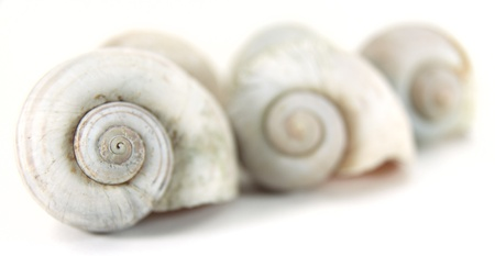 Close up row of nautilus shell. photo