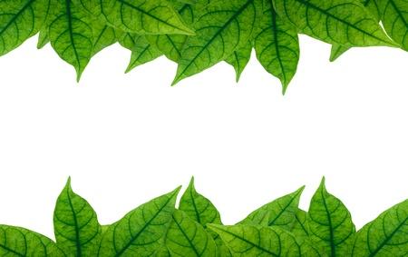 Zöld levél keret fehér háttérrel.