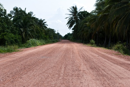 ploughing: Rural road lined with trees.