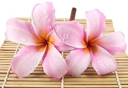 Frangipani flower on bamboo Stock Photo - 10994997
