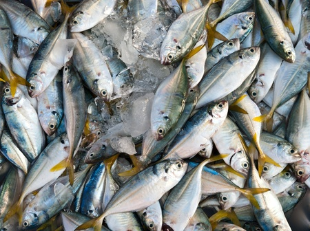Fresh mackerel in the market  photo