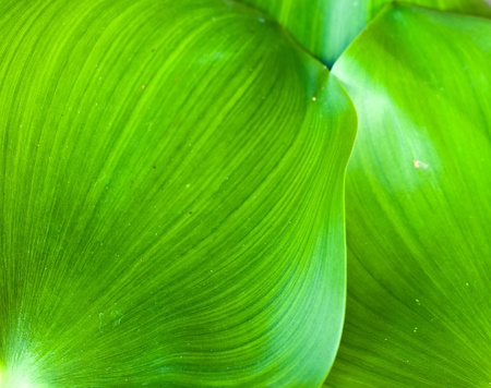 Close up of water hyacinth cover  pond  photo