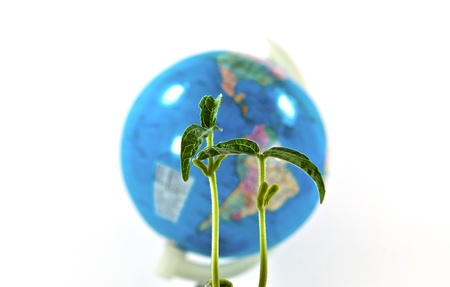 A young new plant with blur globe background photo