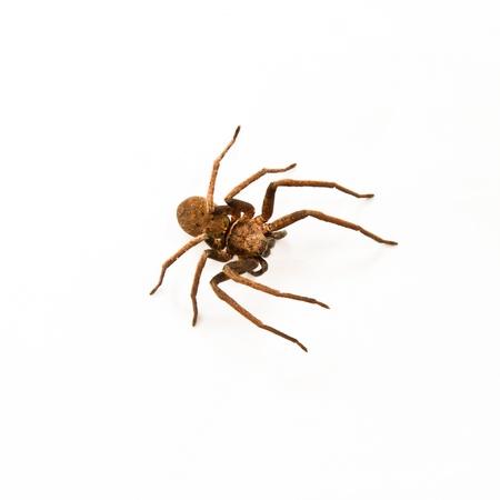 Spider on white background photo