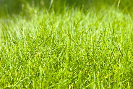 Green grass in the nature photo