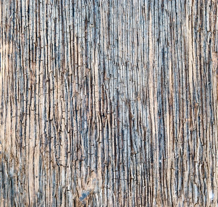 Detail of old wood texture Stock Photo - 13585013