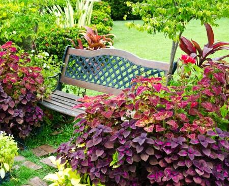 Garden bench photo