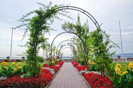 Rose archs