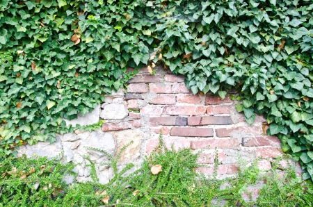 Grunge brick wall with green plant frame  photo