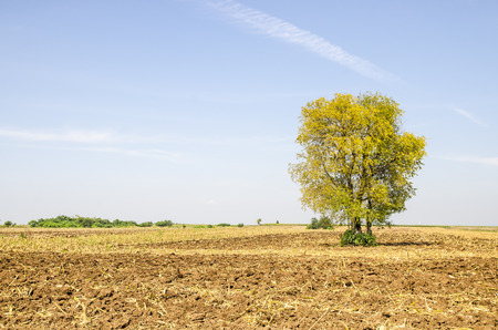agri: View of tree and blue sky in harvest farm