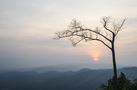 Tree of the evening photo