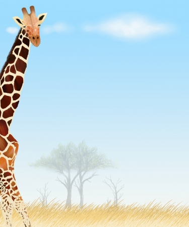 Postcard and Paper Note of Giraffe background Stock Photo - 14430900