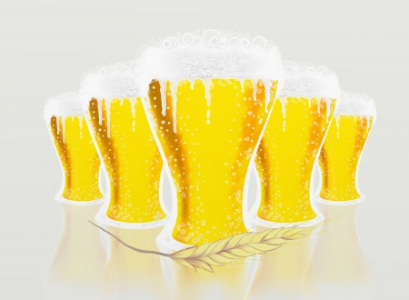 Glasses of beer of beer and Barley on white background photo