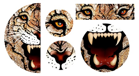 Hand Drawing of Tiger Tooth, Tige Eye, Tiger Nose and Tiger Face into A Semicircle Design photo