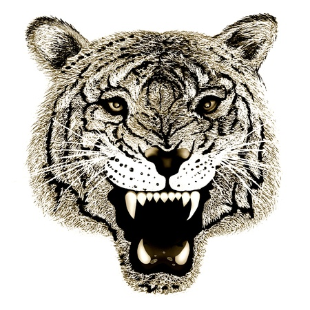 Hand Drawing of Close up Black and White Tiger Head Portrait on Isolated White Background  photo