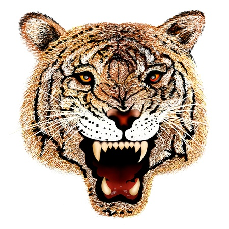 Hand Drawing of Close up Tiger Head Portrait on Isolated White Background  photo
