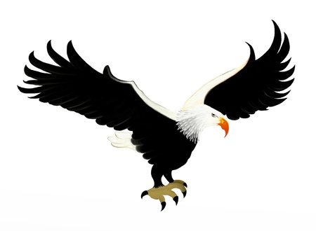 Smart Bald Eagle Soaring in The Sky, Isolated on White Background photo