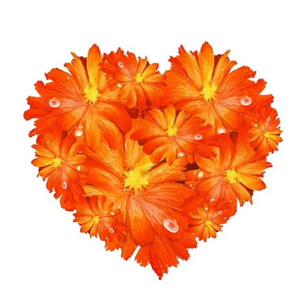 A Beautiful Heart Shape of Orange Gerbera Daisy on A White Background photo