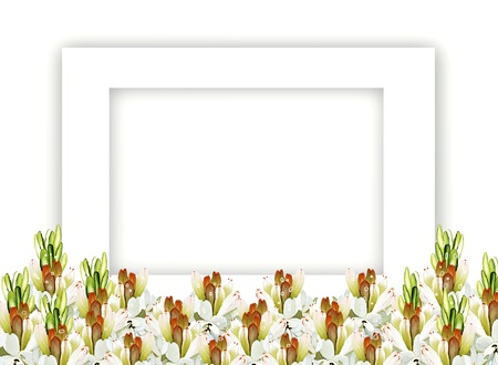 A Group of Beautiful Tuberose Flowers, Horizontal White Frame, Isolated on White Background photo