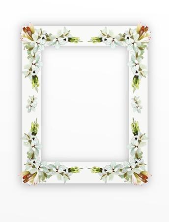 흰색 배경에 고립 된 수직 구조로 배열 아름다운 꽃 월 하향