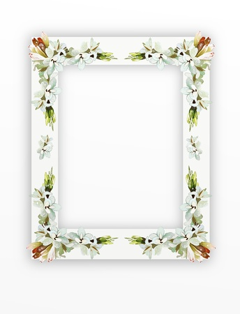 wedding photo frame: A Beautiful Tuberose Flowers Arranged as A Vertical Frame Isolated on White Background