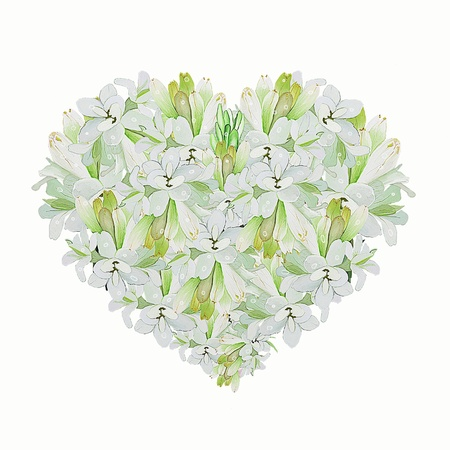 A Beautiful Heart Shape of White Tuberose Flower on A White Background photo