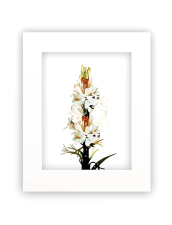 A Beautiful White Tuberose Flowers in A Vertical Frame, Islated on White Background photo