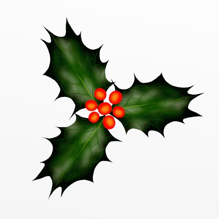 holly leaves: Christmas Holly Twig for Christmas Eve
