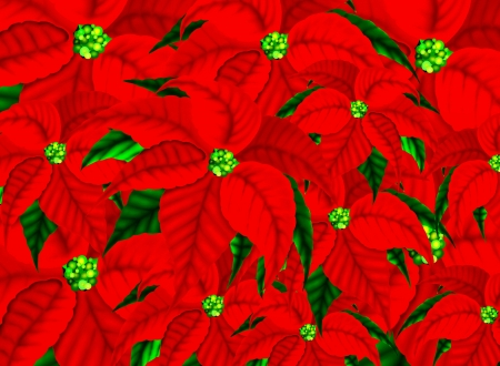 Poinsettia Flowers Pattern Background for Christmas   photo