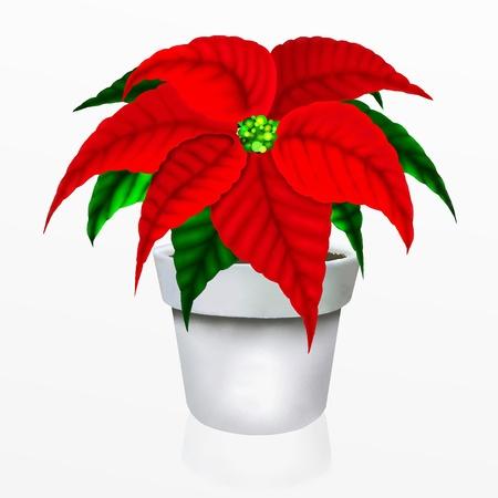 Christmas Poinsettia Flower in White Pot Stock Photo - 14792312