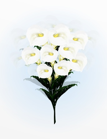A Beautifully Calla Lilies Flower in Bouquet, A Simple and Elegant Bouquet on A Light Blue Background Calla Lily Very Popular, Especially as A Wedding Flower and Special Events   photo