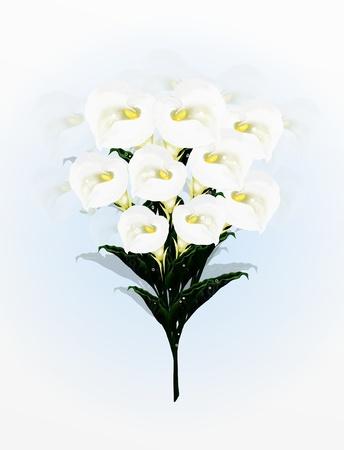 eventos especiales: Una bella Calla Lilies Ramo de flores en, Un ramo sencillo y elegante en un fondo azul claro Calla Lily muy popular, especialmente como Flor de la boda y Eventos Especiales