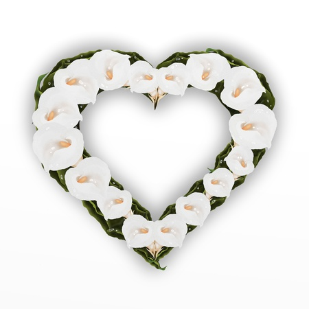A Beautifully Heart Frame of White Calla Lily Flower, Isolated on A White Background, Apply Wonderful Calla Lily Frames to Your Photos   photo