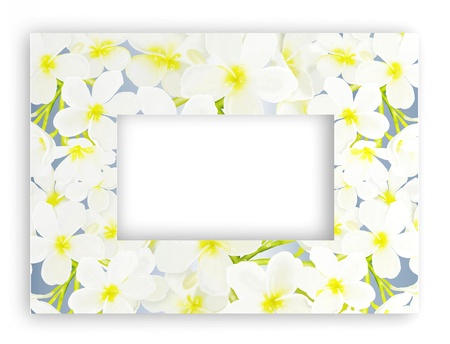 A Beautyful Plumeria Frangipanis Arranged as A Horizontal Frame, Isolated on White Background   photo