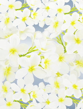 The Beautyful White Tropical Plumeria frangipani Flowers Overlay on Blue Background   photo