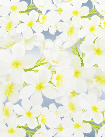 beautyful: The Beautyful White Tropical Plumeria frangipani Flowers Overlay on Blue Background