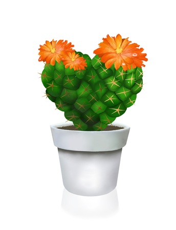 This Cute Heart Cactus and Cactus Flowers in White Pot, Closeup Isolated on White Background  photo