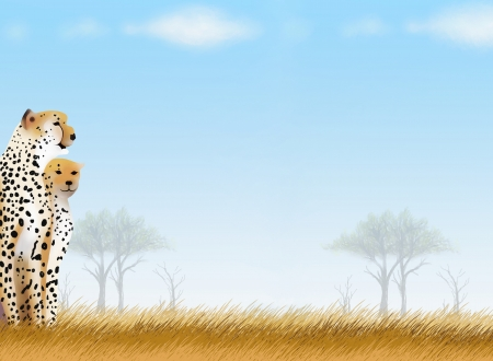 Hand Drawing of Two Cheetah in The Bueatyful Safari Park Background, Take for Postcard or Note Paper Stock Photo - 15618209