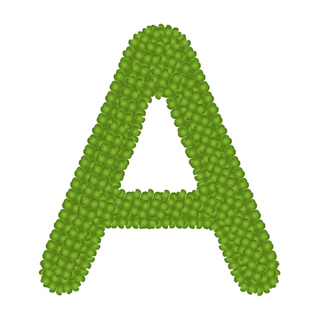 Letter A, Alphabet Letters Made of Four Leaf Clover Isolated on White Background photo