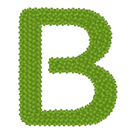 Letter B, Alphabet Letters Made of Four Leaf Clover Isolated on White Background photo