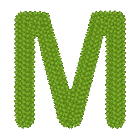 Letter M, Alphabet Letters Made of Four Leaf Clover Isolated on White Background photo