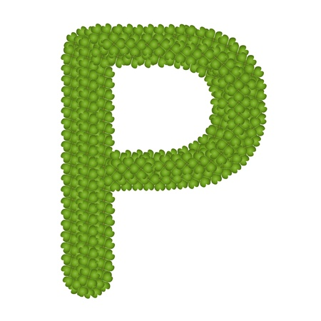 Letter P, Alphabet Letters Made of Four Leaf Clover Isolated on White Background Stock Photo - 16010838