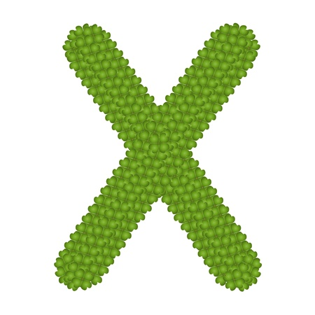 Letter X, Alphabet Letters Made of Four Leaf Clover Isolated on White Background Stock Photo - 16010855