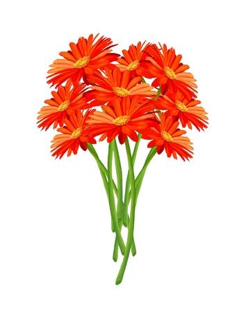 Dessin à la main, gros plan d'un bouquet de Bright and Beautiful Gerbera Daisy isolé sur fond blanc